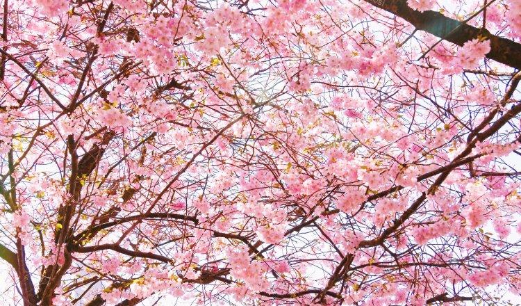 Skin care for spring